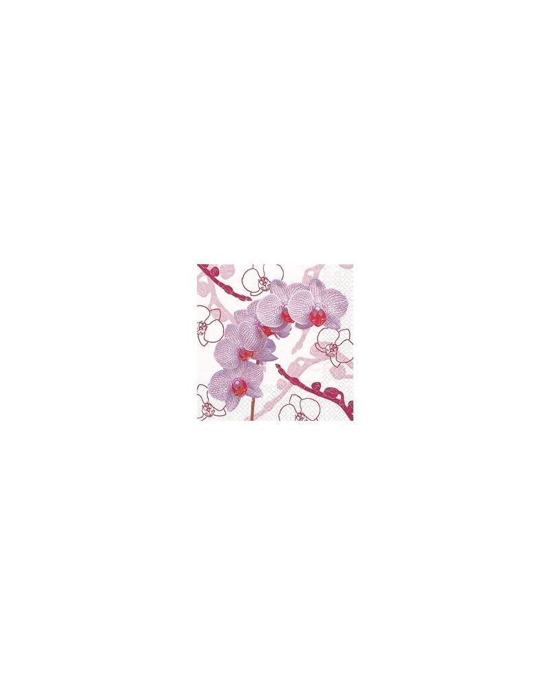 Augmenija 33x33