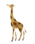 Trafaretas 7x10cm Žirafa (Giraffe)
